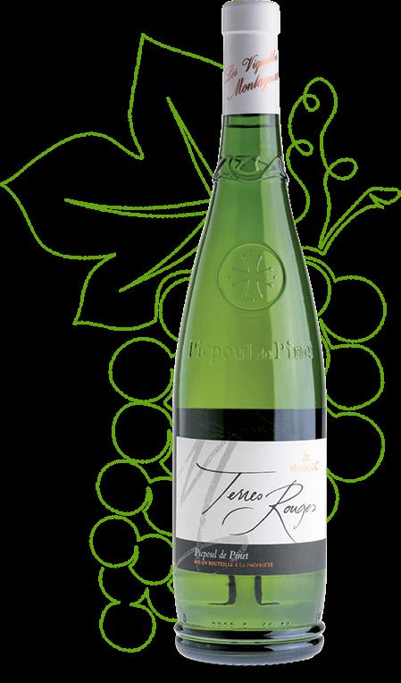Le picpoul de Pinet terres rouges des vignerons Montagnac Domitienne est distribué par les négociants régionaux ou nationaux