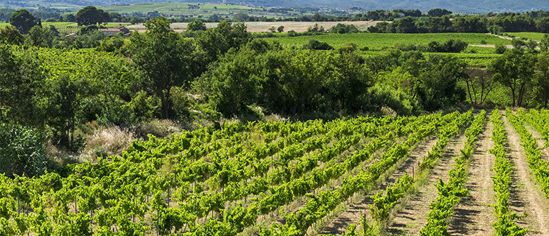 Les vignerons Montagnac Domitienne vous propose de découvrir le patrimoine viticole