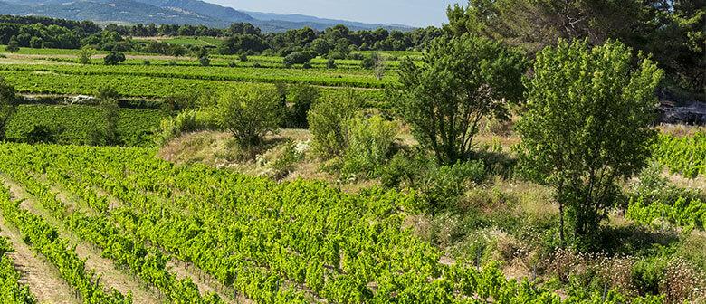 Les vins des vignerons Montagnac Domitienne sont en vente dans nos caveaux de Montagnac, Cournonsec, Tourbes