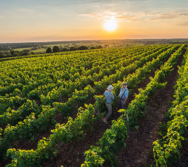 Vue des vignes ou sont élevés les vins de cépages, de la Coopérative les vignerons Montagnac Domitienne