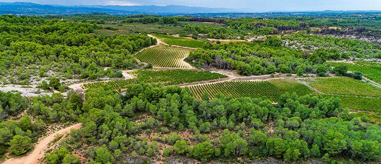 La coopérative des vignerons Montagnac Domitienne, c'est d'abord une histoire d'hommes et de femmes et une belle aventure humaine.