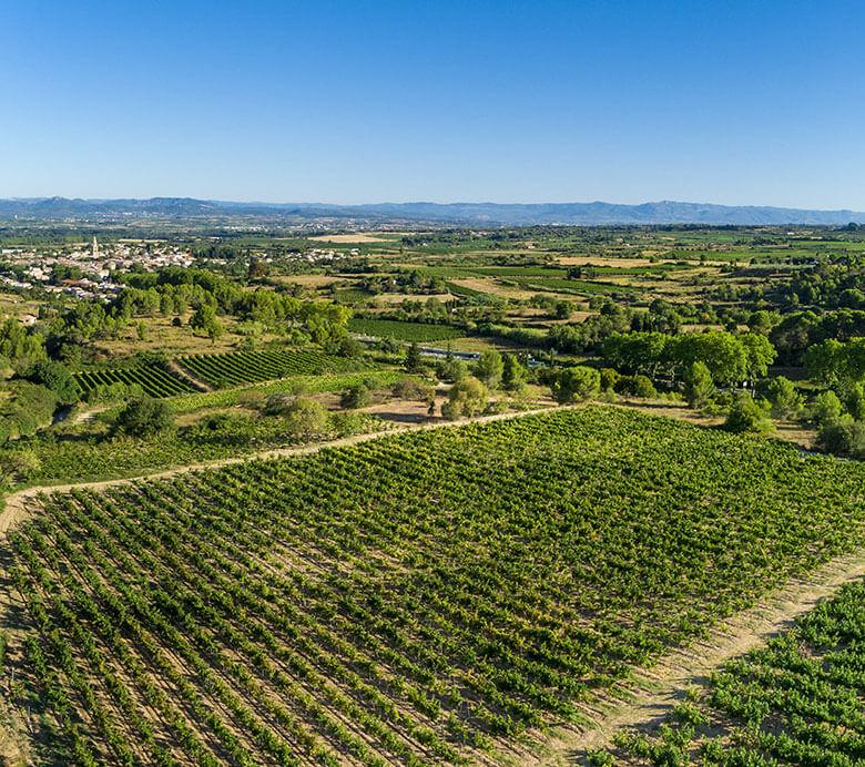 La coopérative des vignerons Montagnac Domitienne regroupe les caves de Gigean, Montbazin, Saint Bauzille de Putois pour une agriculture durable