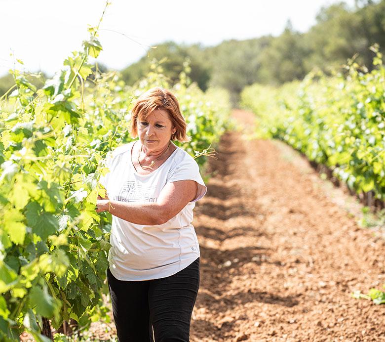 Les vignerons Montagnac Domitienne élaborent des cépages, dans une démarche environnementale