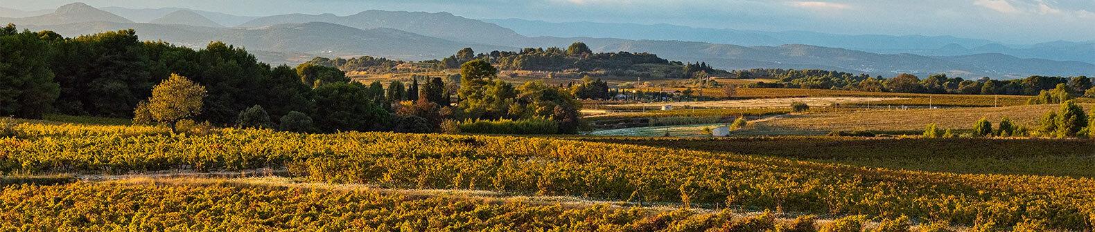 L'histoire des vignerons Montagnac Domitienne d'où sont produits les vins picpoul de Pinet, IGP Pays d'Oc
