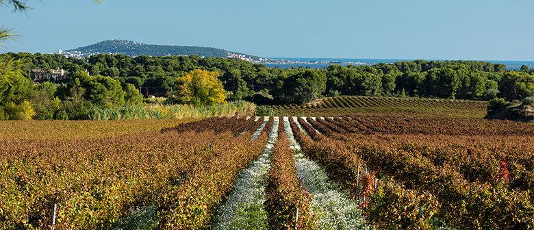 L'histoire des vignerons Montagnac Domitienne perpétuant la mise en œuvre de leur patrimoine viticole