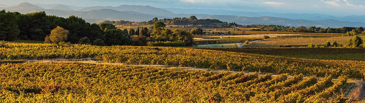 Le terroir des vignerons Montagnac Domitienne