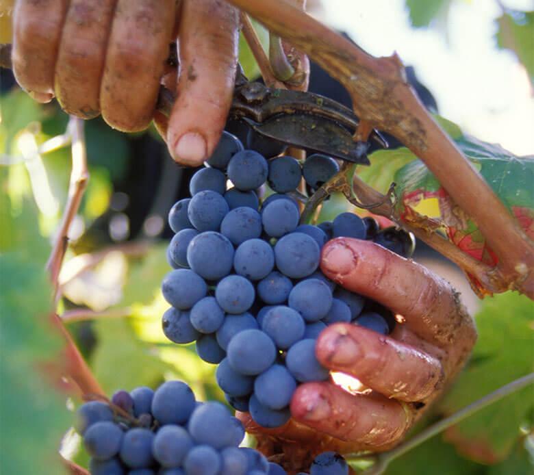Vue du terroir des vignerons Montagnac Domitienne