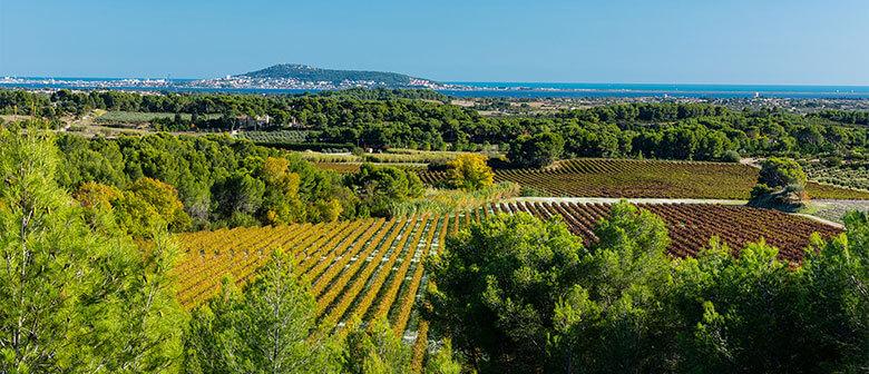 Vue du terroir des vignerons Montagnac Domitienne ou sont produits les vins de cépages IGP Pays d'Oc, IGP Côtes de Bessilles