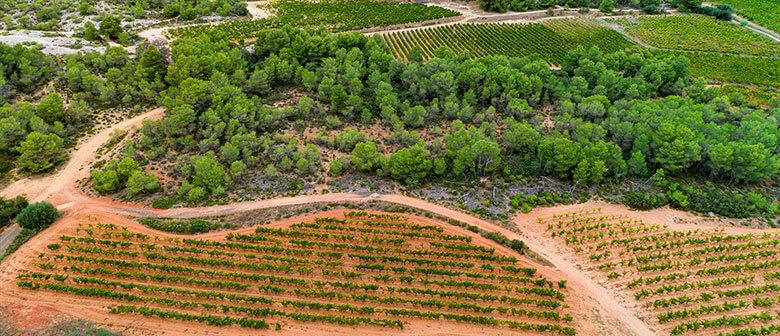 Le terroir des vignerons Montagnac Domitienne ou sont produits les vins de cépages picpoul de Pinet
