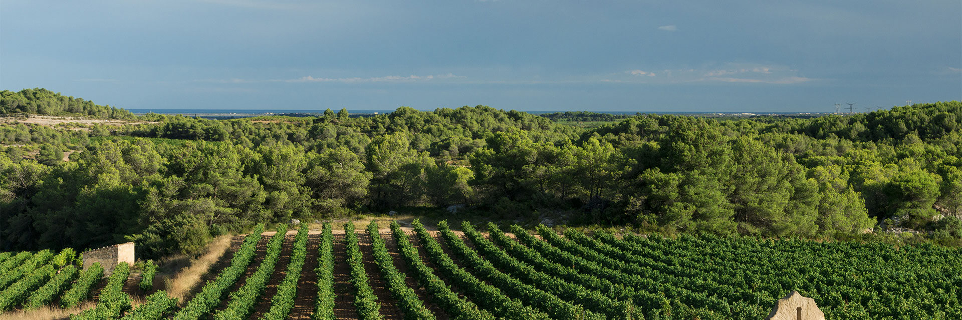 Les vignerons Montagnac Domitienne évoluent dans un univers chargé d'histoire